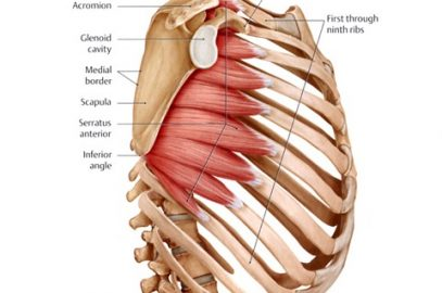 Massage for the Serratus Anterior Muscle